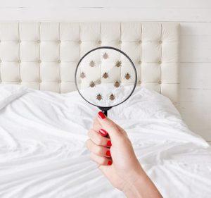 Punaise de lit détecté
