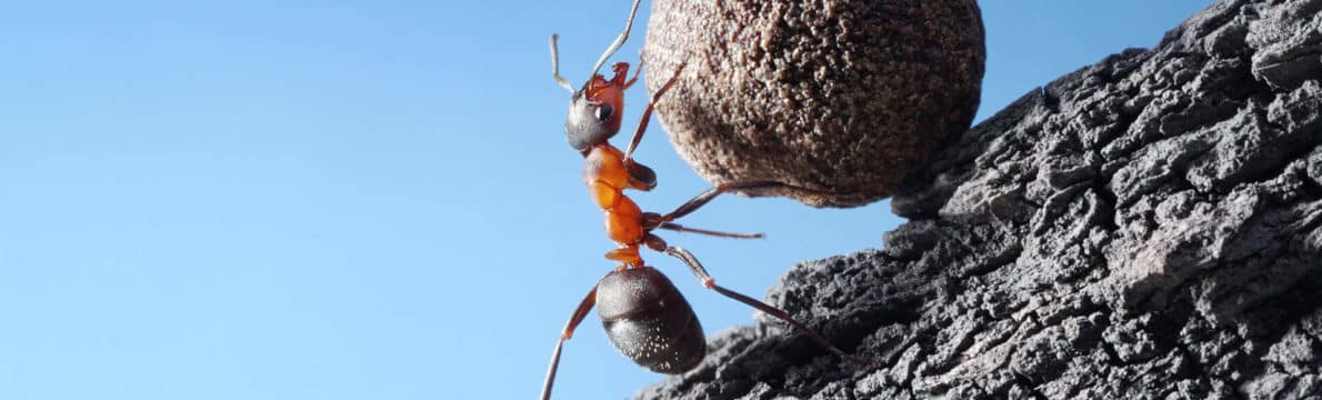 Traitement anti fourmis