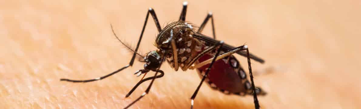 Traitement anti moustiques