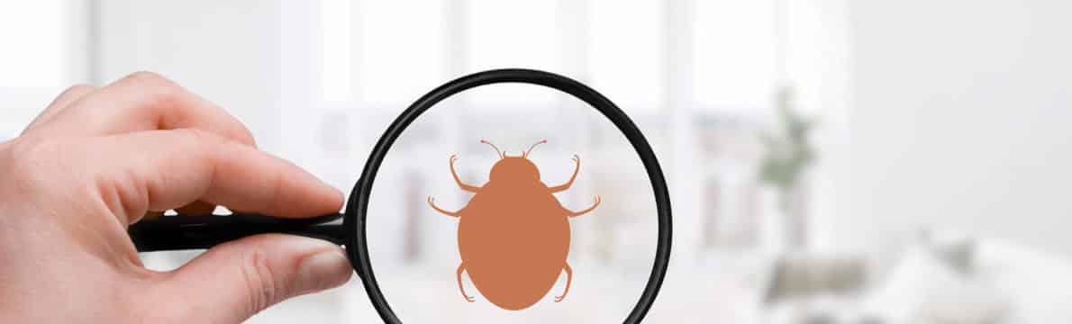 Prévenir une invasion de punaises de lit dans votre maison