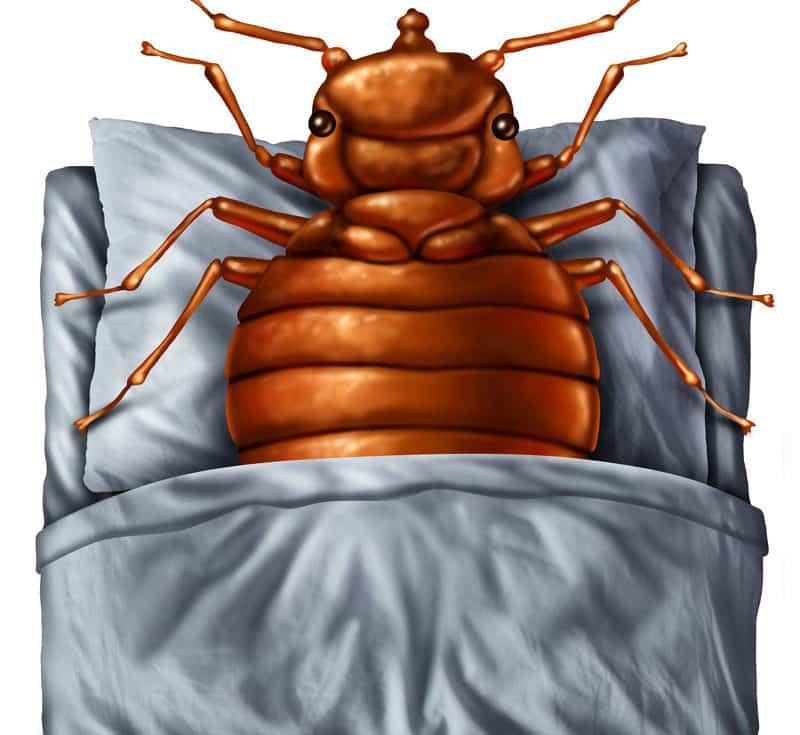 Traitement thermique des punaises de lit