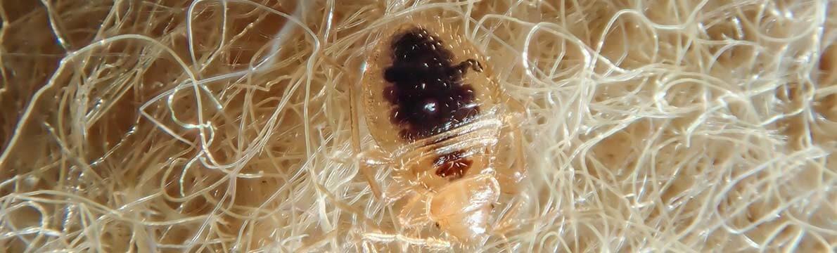 Traitement par cryogénie pour éliminer les punaises de lit