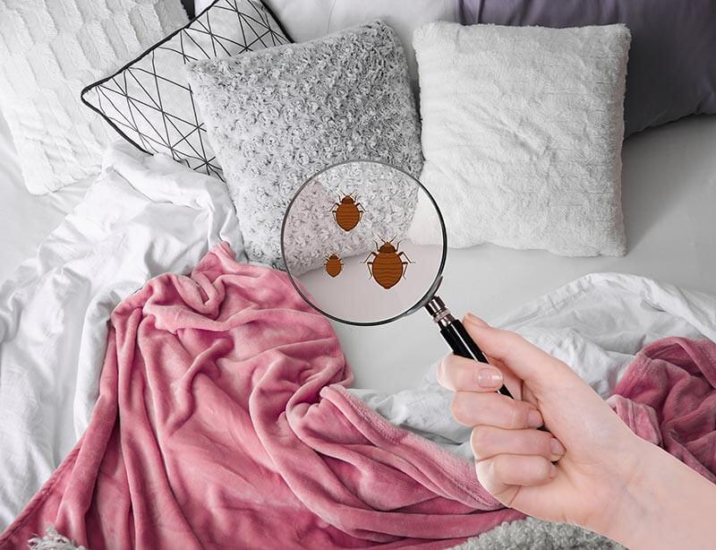 Les cachettes des punaises de lit