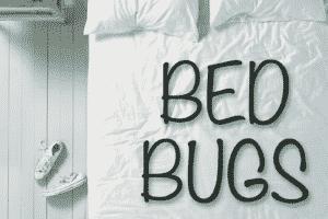 Traitementanti punaises de lit