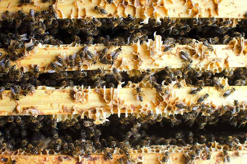 insecte rampants et volatiles