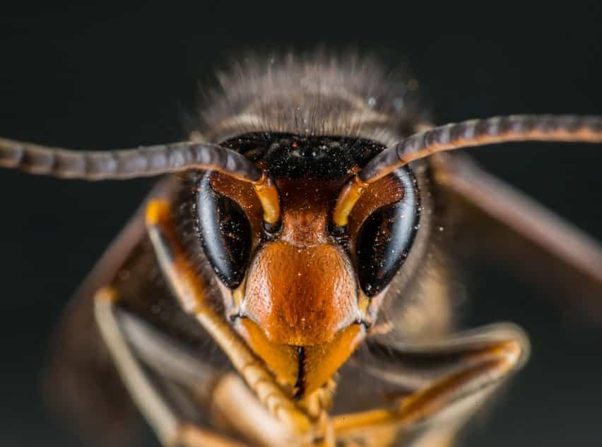 Hygiène-Biotech, le spécialiste de l'éradication des nids de frelons