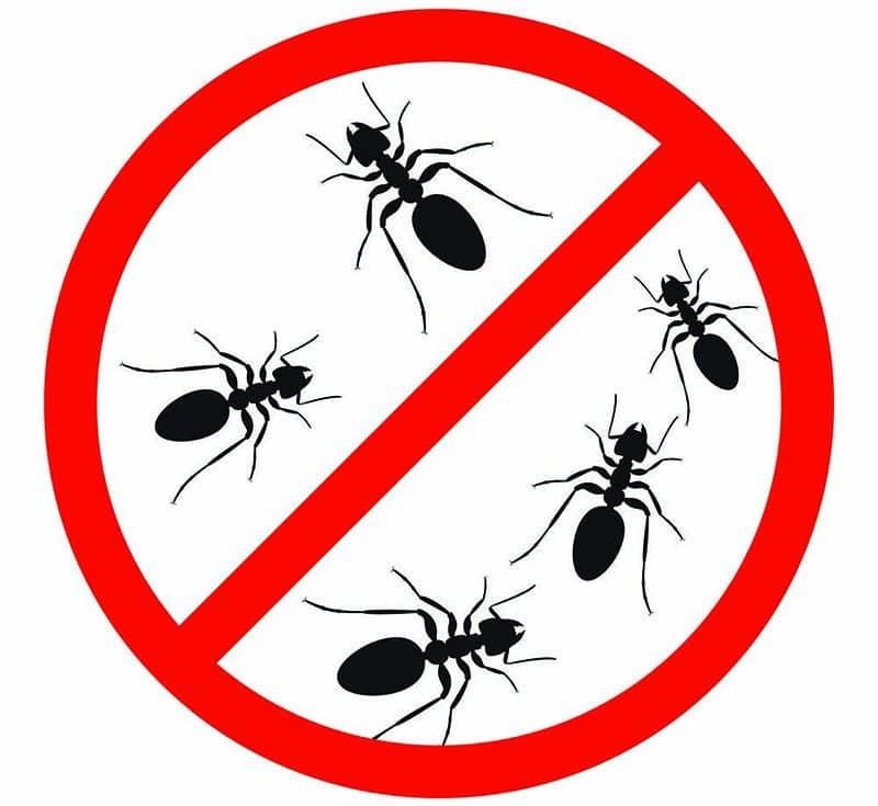 Le pack prévention anti fourmis