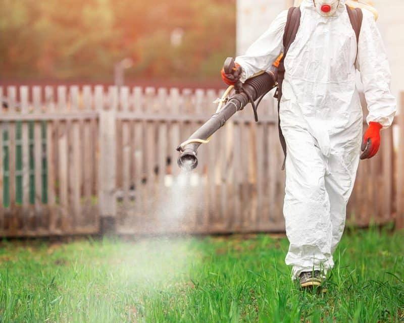 Traitement-anti-moustiques-ecologique