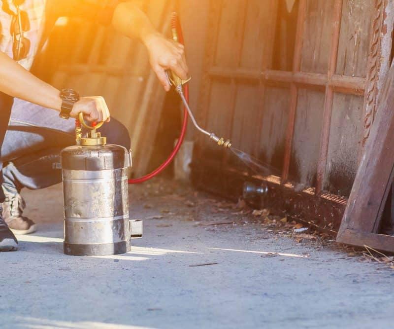 Traitement chimique anti fourmis par pulvérisation d'insecticide